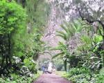 El jardín botánico está ideal para visitarlo.