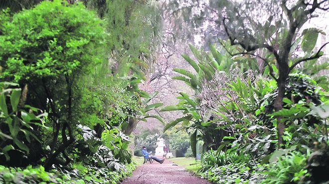 Vecinos y comunas el jard n bot nico un museo vivo for El jardin botanico