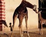 jiradas-en-zoo